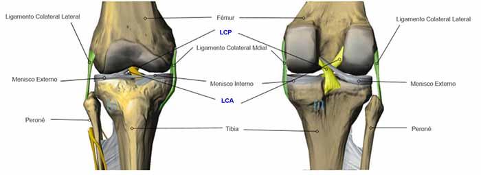 Artroscopia de Rodilla. Anatomia